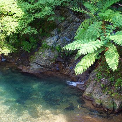 奄美大島 風景 アルファピニ shellwomb